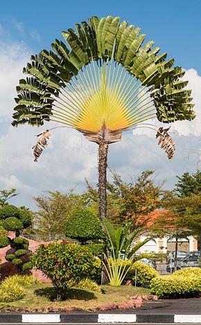 Les plantes endémiques, une spécificité de Madagascar